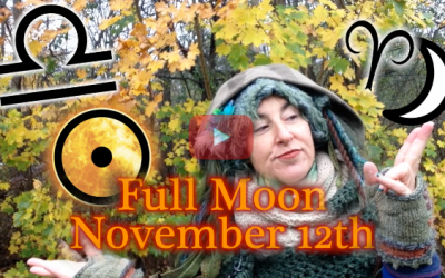 November 12th Full Moon ~ Feed your Taproot!