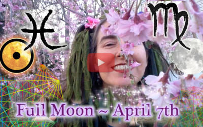 Webs of Life! ~April 7th Full Moon
